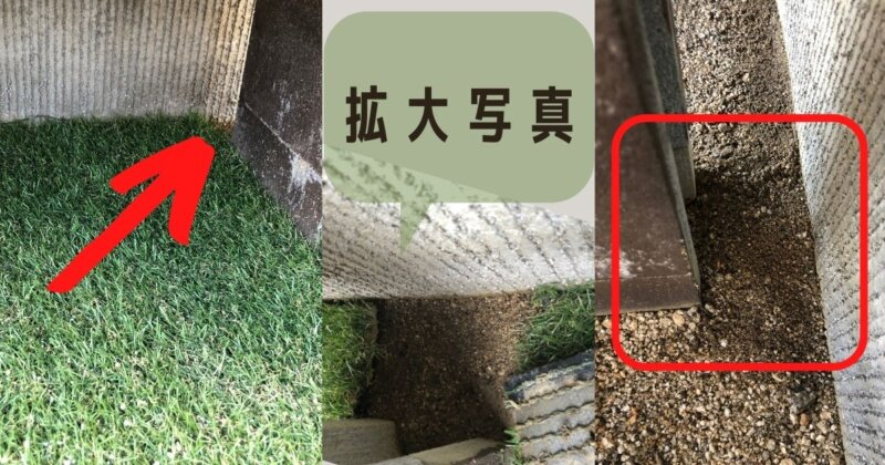 蟻の巣らしき場所